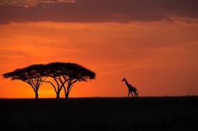 Luxury Safaris & Zanzibar Beach Tour-Northern Tanzania tour