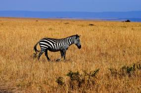 The Best of Tanzania