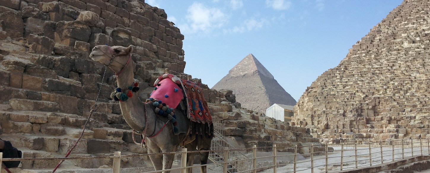 Camel standing in front of Giza pyramids, Egypt from Jakada Tours