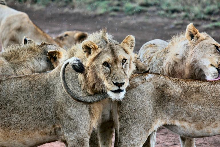 Family Tanzania Safari tour