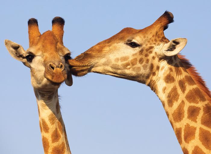 Johannesburg Kalahari Desert Experience Southern Africa Trip