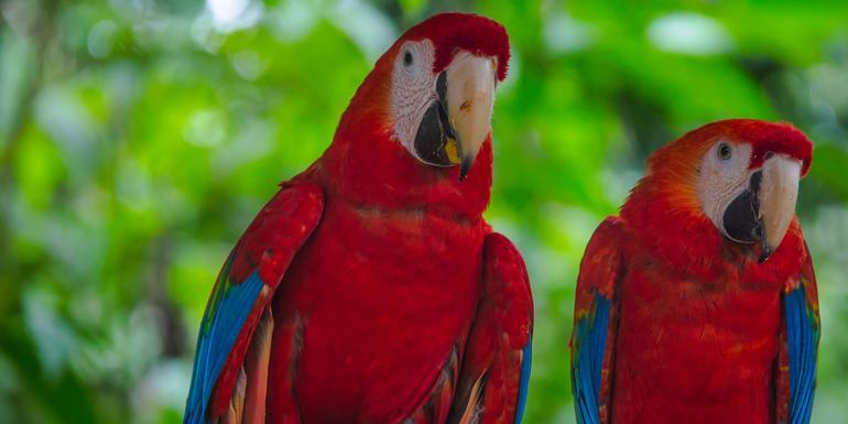 G Lodge Amazon & Camping - 4 Day Independent Adventure tour