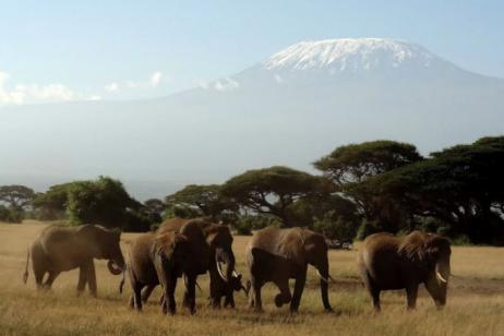 Kenya Wildlife Safari tour