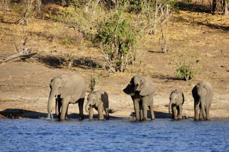 Botswana/Zambia Family   Okavango Delta To Victoria Falls tour