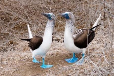North Galápagos tour