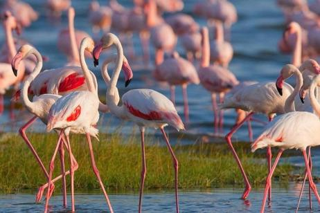Kenya Adventure Itinerary tour
