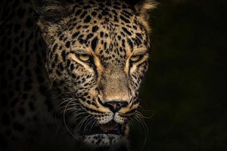 Kenya and Tanzania Serengeti Survey Safari tour