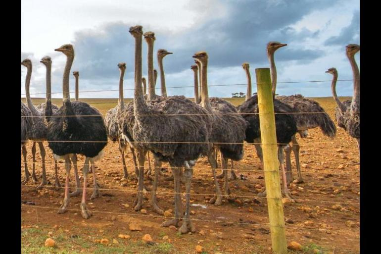 Education / Learning Educational/ learning Tailormade Cape Town to the Eastern Cape package