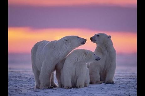 Realm of the Polar Bear  - Expedition tour