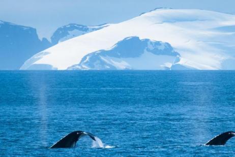 Marine Mammals of the Antarctic Peninsula tour