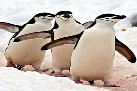 Antarctica - Christmas 2018 tour