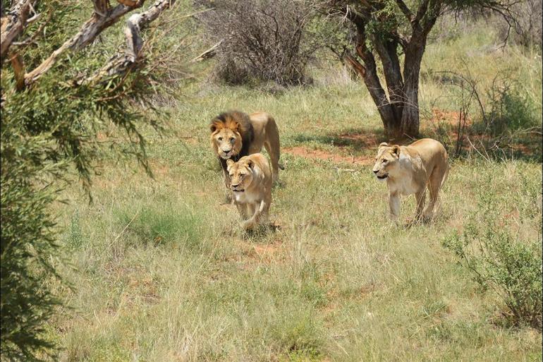 Johannesburg Kruger National Park South Africa: Kruger Walking Safari Trip