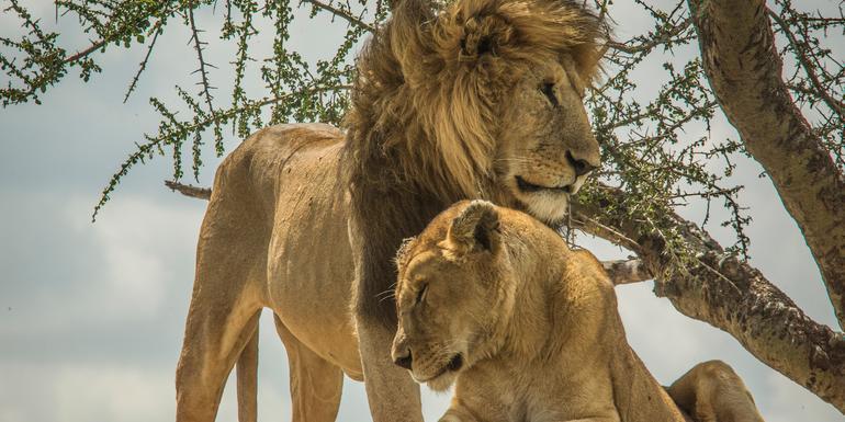 Wildlife Parks of Tanzania tour