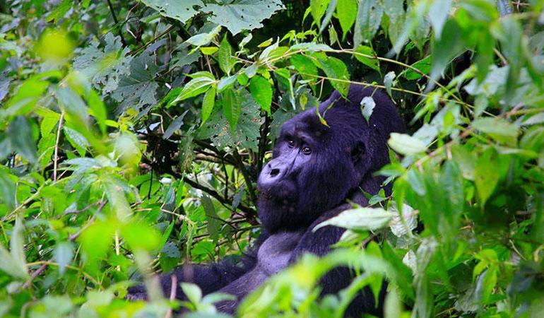 Gorillas & Plains tour