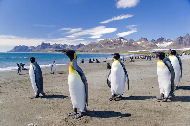 Antarctic Peninsula Georgia Antarctic Peninsula, Falkland Islands & South Georgia from Ushuaia Trip
