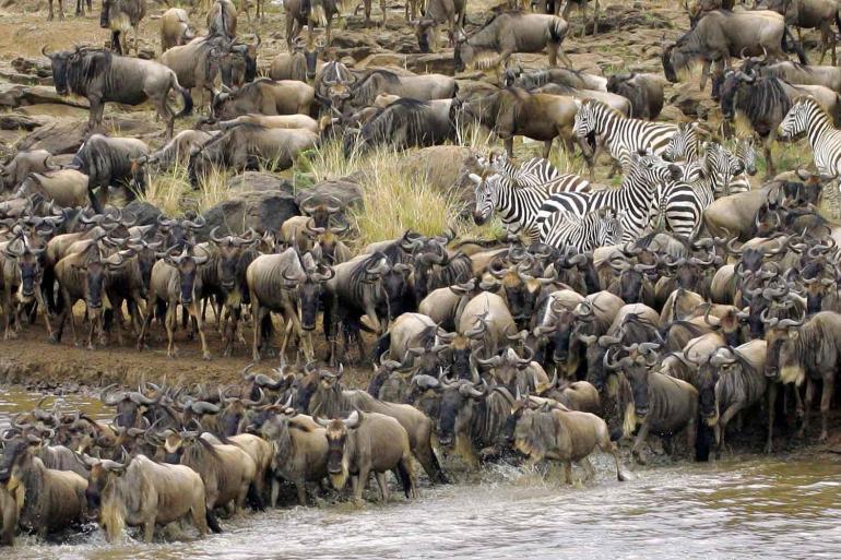 East Africa Migration Safari: Limited Edition tour
