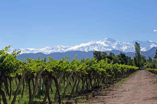 Chile & Argentina Wine Experience tour