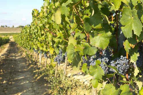 Spain's Wine Regions tour