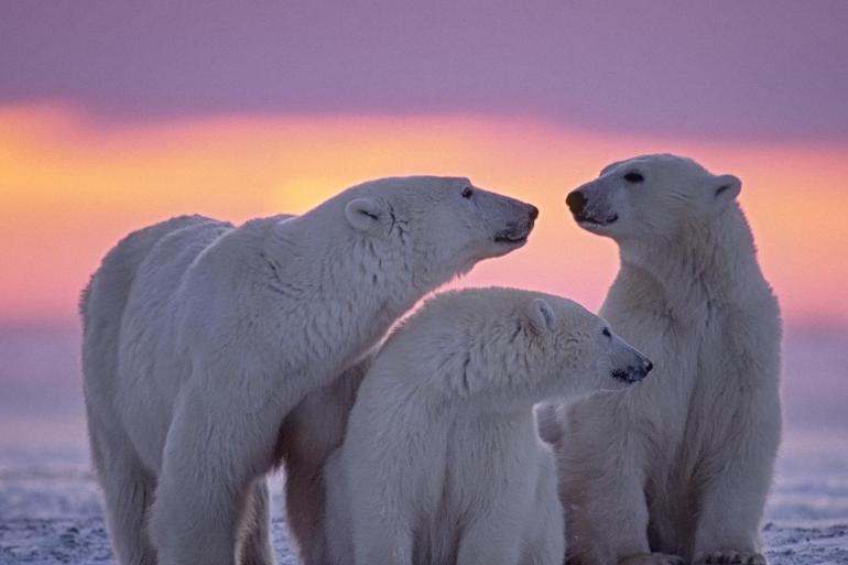Spitsbergen Encounter  tour