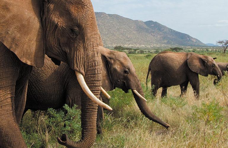 Grand Africa: Nairobi to Port Elizabeth tour