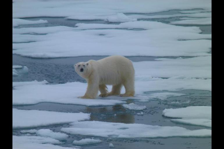 Nature & Wildlife Wildlife viewing Realm of the Polar Bear in Depth - M/S Spitsbergen package