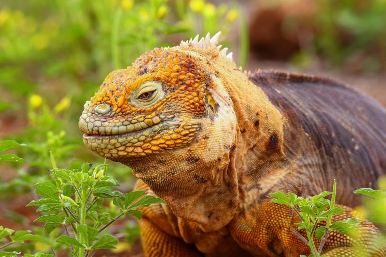 Galapagos Islands Vacation tour