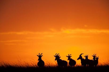Classic Kenya Safari - Premium tour