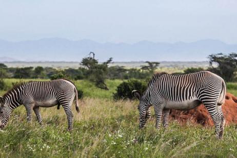 Rift Valley Lakes, Masai Mara, Diani Beach Classic tour