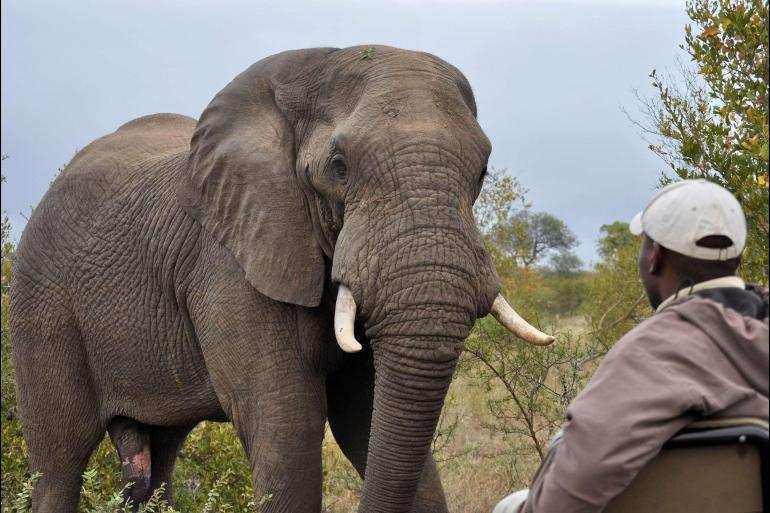Cape Town Johannesburg Kruger & Cape Town Experience: Independent Trip