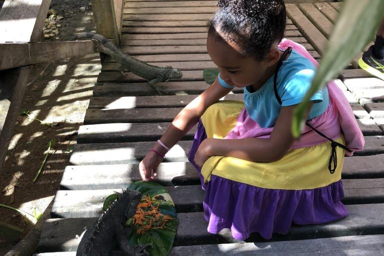 Belize iguana