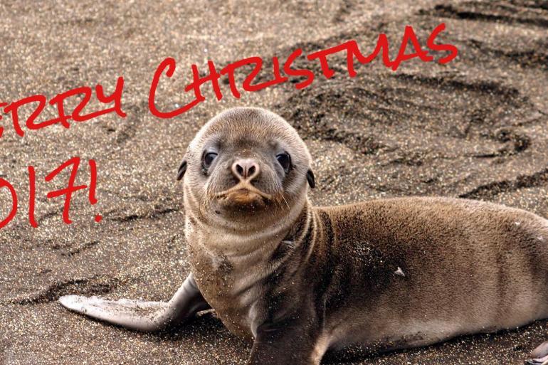 Galapagos Islands: Christmas Vacations tour