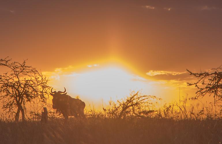 Kenya Safari Experience - Independent tour