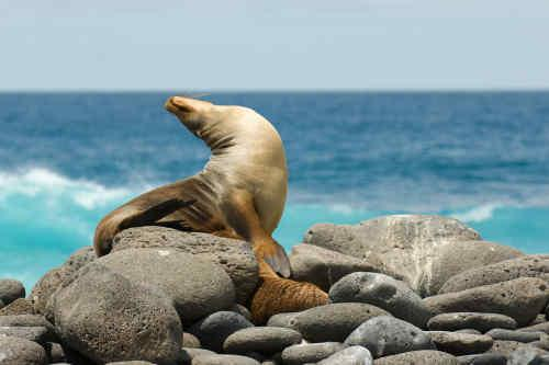 Quito & The Astonishing Galapagos tour