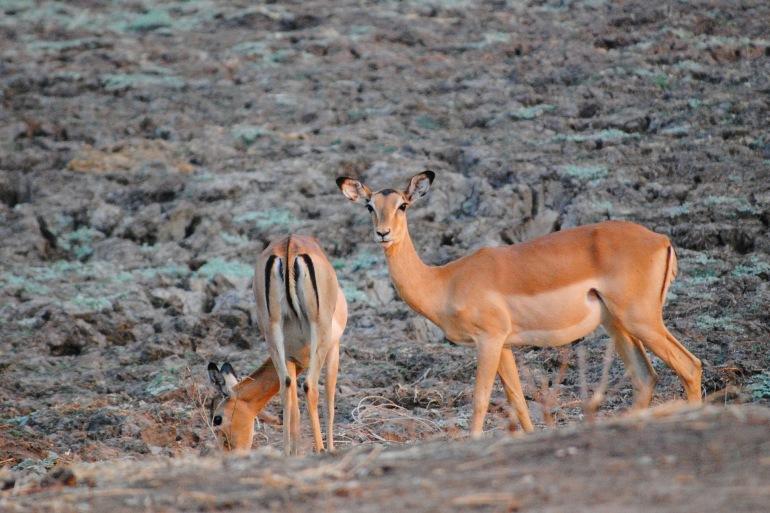 Zambia Safari tour