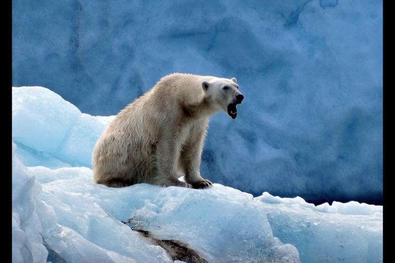 Nature & Wildlife Nature Three Arctic Islands: Spitsbergen, Greenland and Iceland (Southbound) package