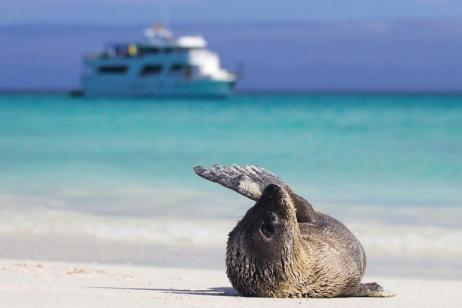 Highlights of Quito & Galapagos Cruise tour
