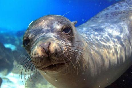 Galapagos Island Hopping: Santa Cruz, Floreana & Isabela tour