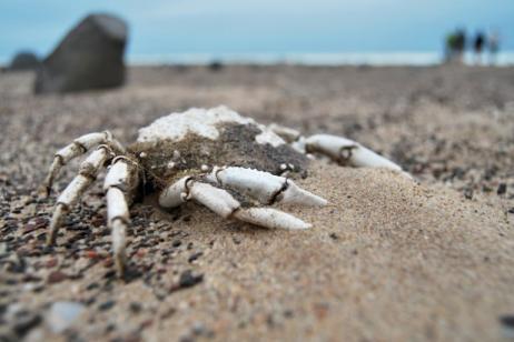 Skeleton Coast & Conservancy Safari tour