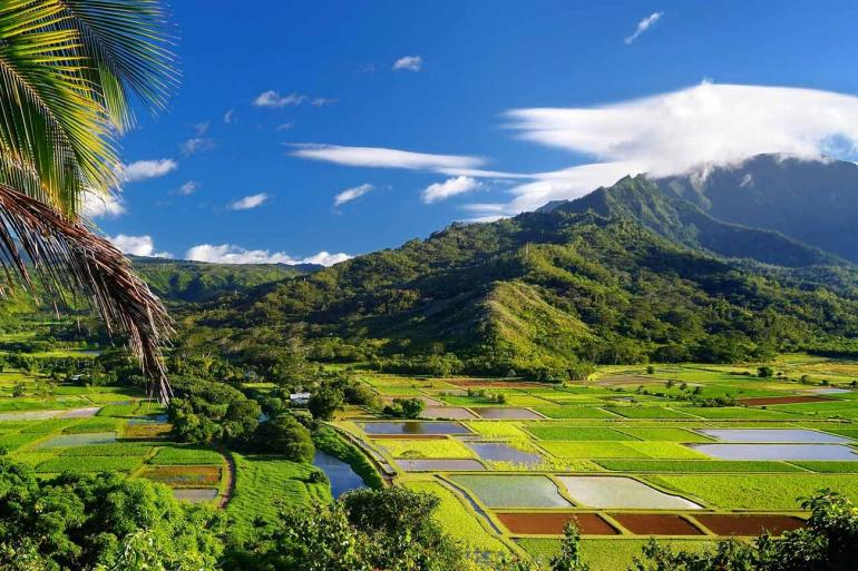 Hawaiian Discovery First Class Summer 2019 tour
