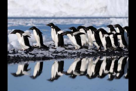 The Antarctic Peninsula and Weddell Sea - Fly and Cruise - M/V Polar Pioneer tour