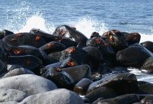 Crabs on the Rocks_Galapagos_Ecuador_1220314_P