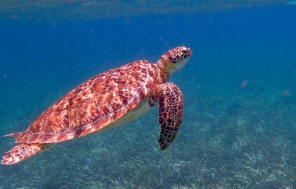 Belize Scuba Tours Attractions