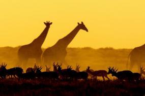 Namibia 4WD Desert Safari tour
