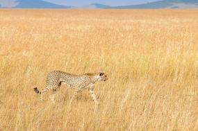 Great Kenya Safari