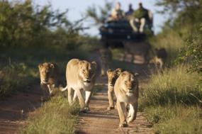 Classic Kenya Highlights Safari