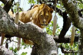 Kenya & Tanzania 10 Days Safari