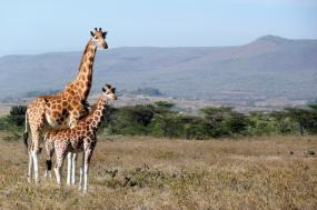 6 Nights 7 Days Rosolo Kenyan Safari