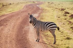 Amboseli Trails
