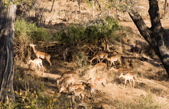 Botswana Safari Victoria Falls to Maun tour
