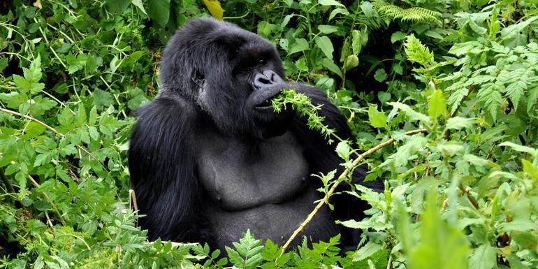 Culture & Wildlife of Uganda & Rwanda tour